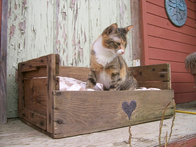 PalletCat Beds