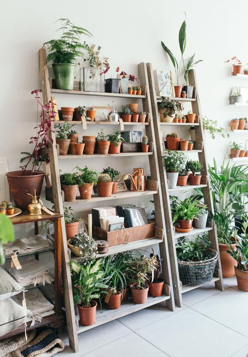 Spruce Ladder Wood Shelf